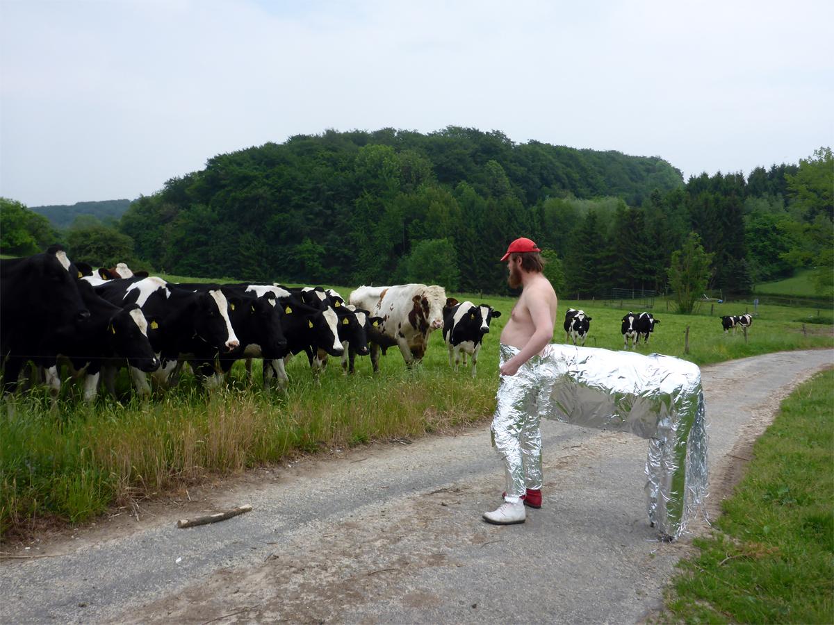 Zentaur-Kuh